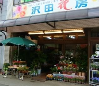 沢田花房 本店